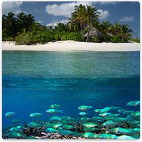 malediven tauchen indischer ozean tauchurlaub auf den malediven waterworld. Black Bedroom Furniture Sets. Home Design Ideas