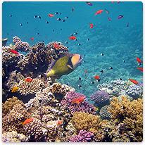 Tauchen Im Roten Meer ägypten Marsa Alam Waterworld Divingde